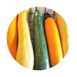 Squash & Melons